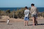 Pinguneira - Punta Tomba