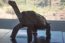 Solitário George - o último de sua espécie morto em 2012