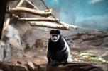 Zoológico de Antuérpia