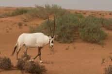 Animal típico da região