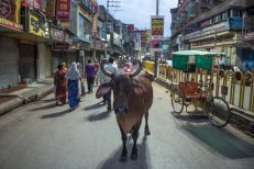 Nas ruas de Varanasi