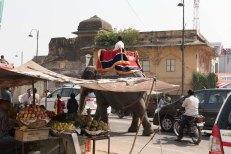 Jaipur - Forte Amber