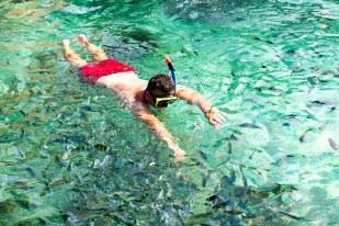 Mergulhando nos arredores de Phi Phi