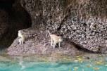 Praia dos macacos - Phi Phi