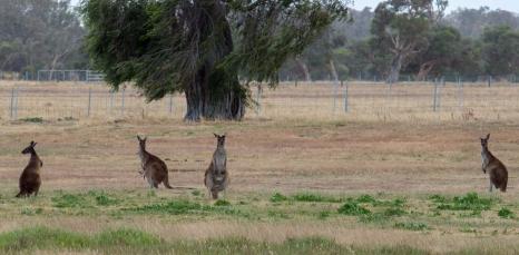 Numa estrada da Austrália